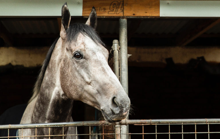 What is a sire and dam in horse racing